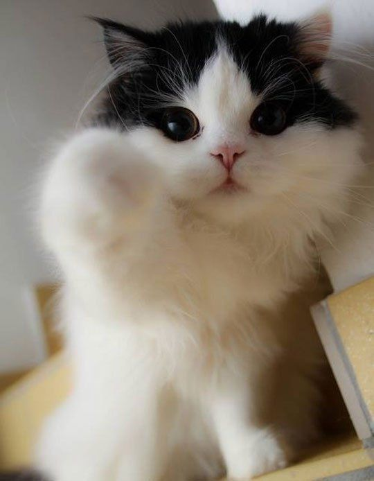 Kitty Boop: A lot like Betty Boop, only boopier. Boop-boop dee doop!해외카지노♥PiNK14.COM♥나인카지노♥PiNK14.COM♥스타카지노
