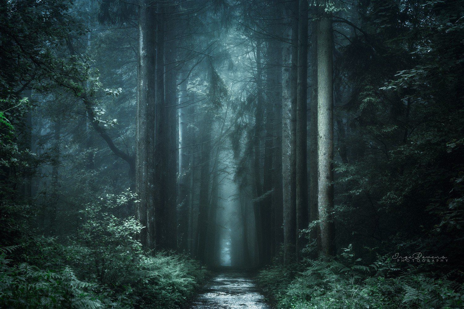 Free Stock Photos Fall Path Photography Trees Mobile Wallpaper Wallpapers Landscape Plants Tumblr Nature Forest Dark Landscape Nature Forest