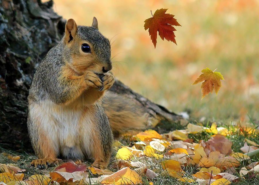 Image result for squirrel autumn