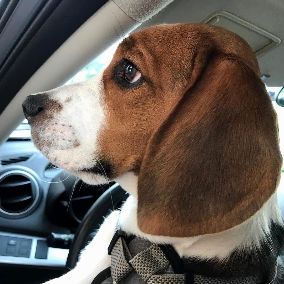 Resultado de imagen para beagle fun