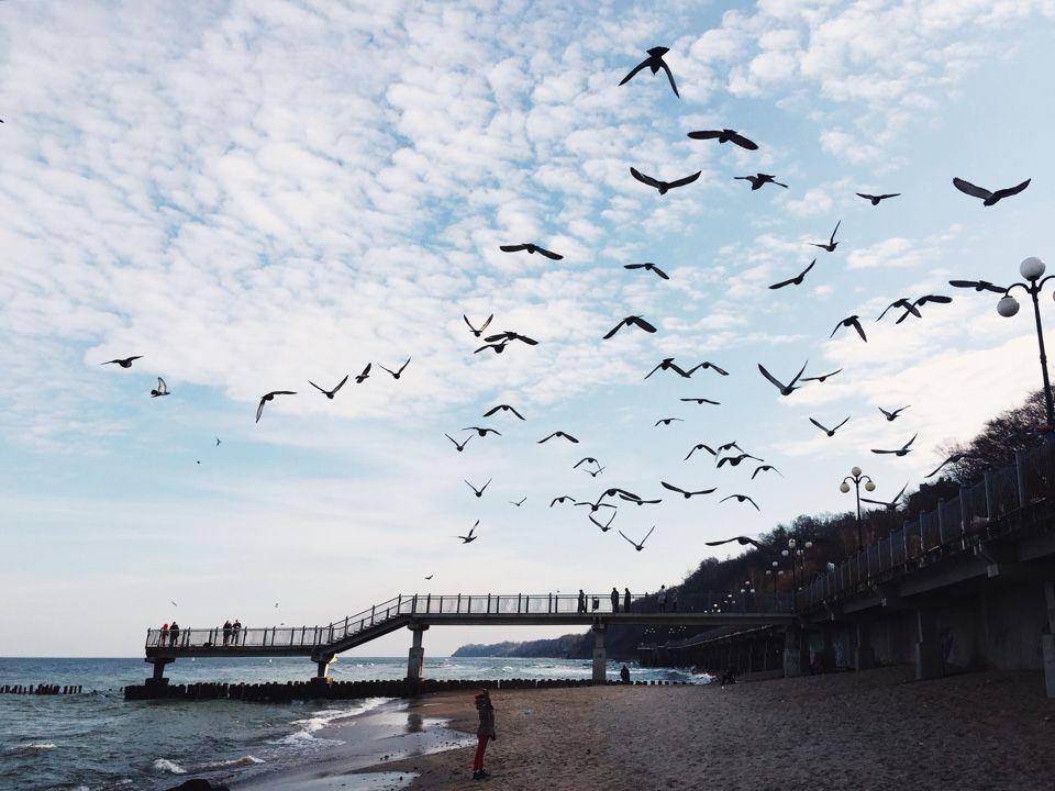 птицы и пляж