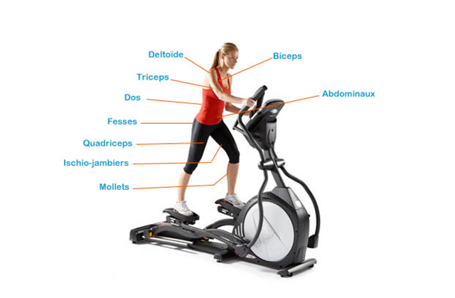 muscles-travaille-velo-elliptique | Sports, Elliptical