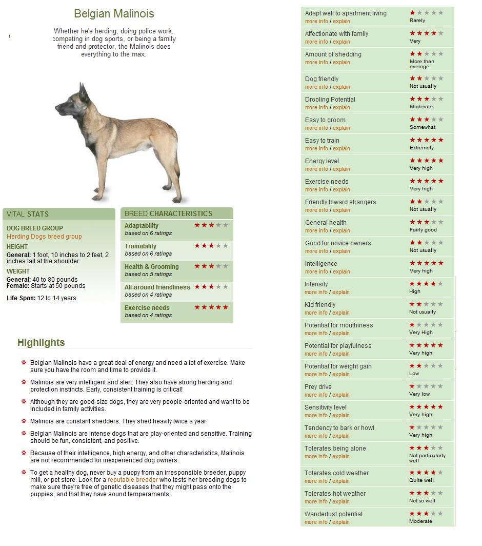 Belgian malinois httpdogtimedog breedsbelgian malinois everything belgian malinois nvjuhfo Gallery