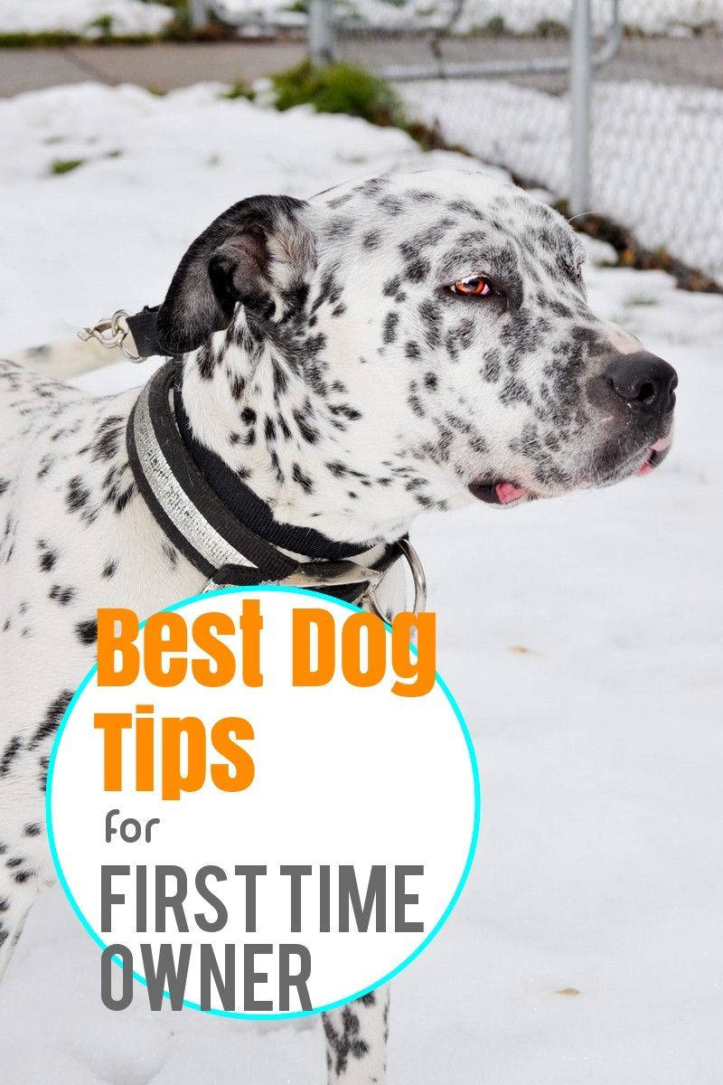 The Surefire Way To Find Dog Ownership Success In 2020 Dogs Your Dog Sleeping Dogs