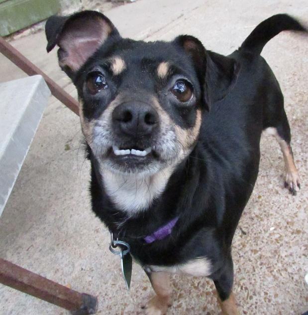 Adopt Mia On Petfinder Dog List Dog Adoption Nyc Dogs