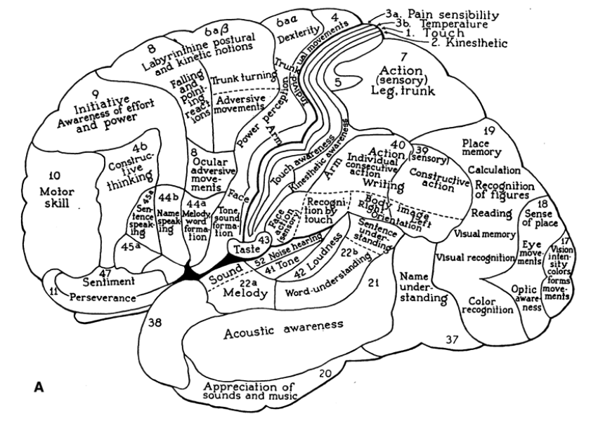 Localization of functions in the cerebral cortex according