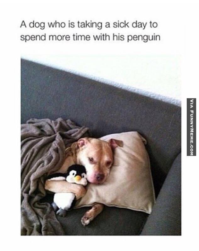 f11b9e6b9d3f672e2895a5bccb16abb0 dog memes doggy sick day animal memes pinterest dog memes