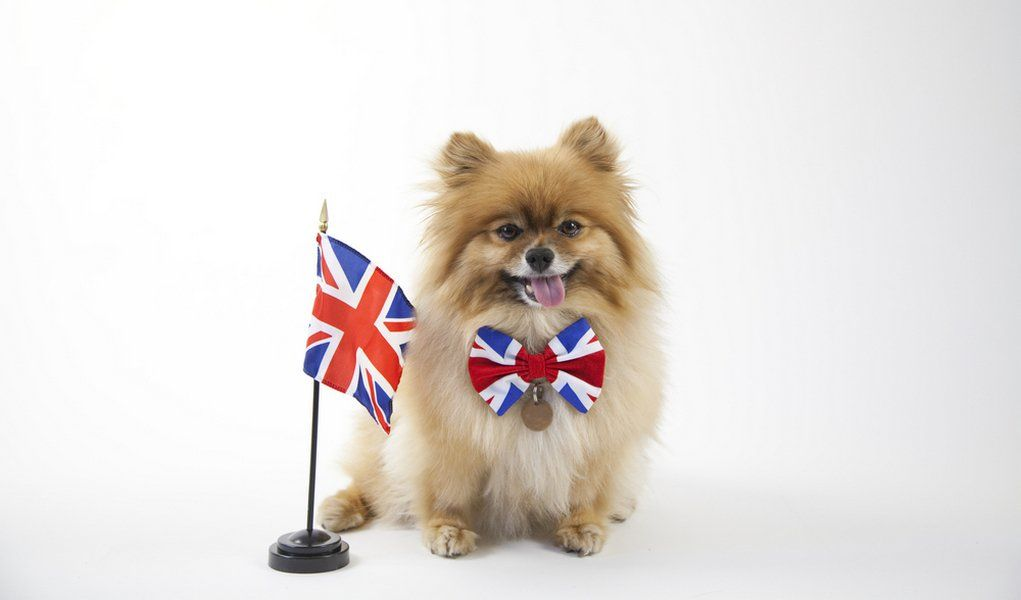 35 most popular breeds in the united kingdom cataracts