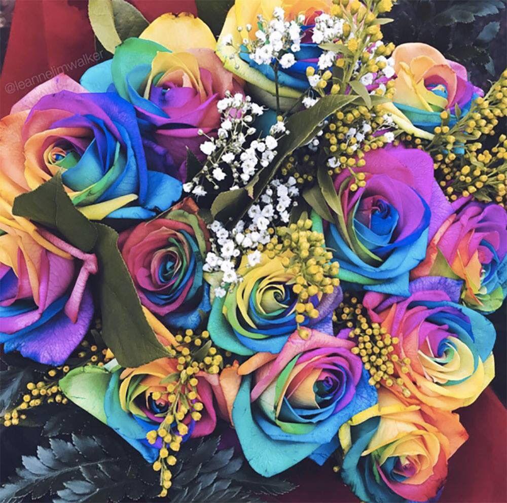 Attrayant Rainbow Roses