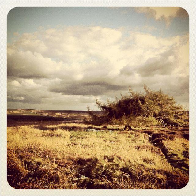 Ken Dodd tree