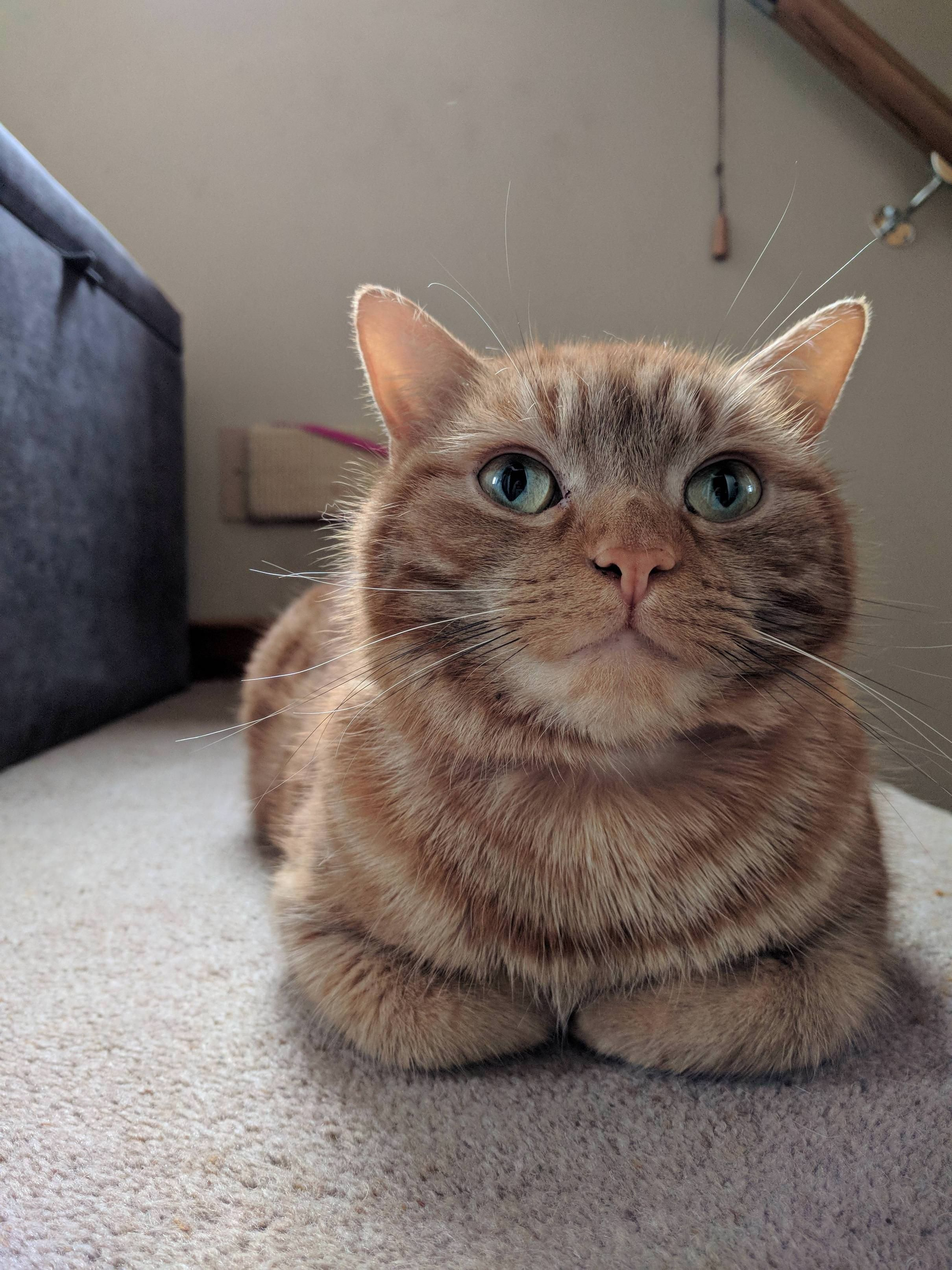 Loafin Around Imgur Com Submitted By Goldenchocoboracer To R Catloaf 0 Comments Original View This Image At Imgur Com Fu With Images Kittens Cutest Funny Cats Cats