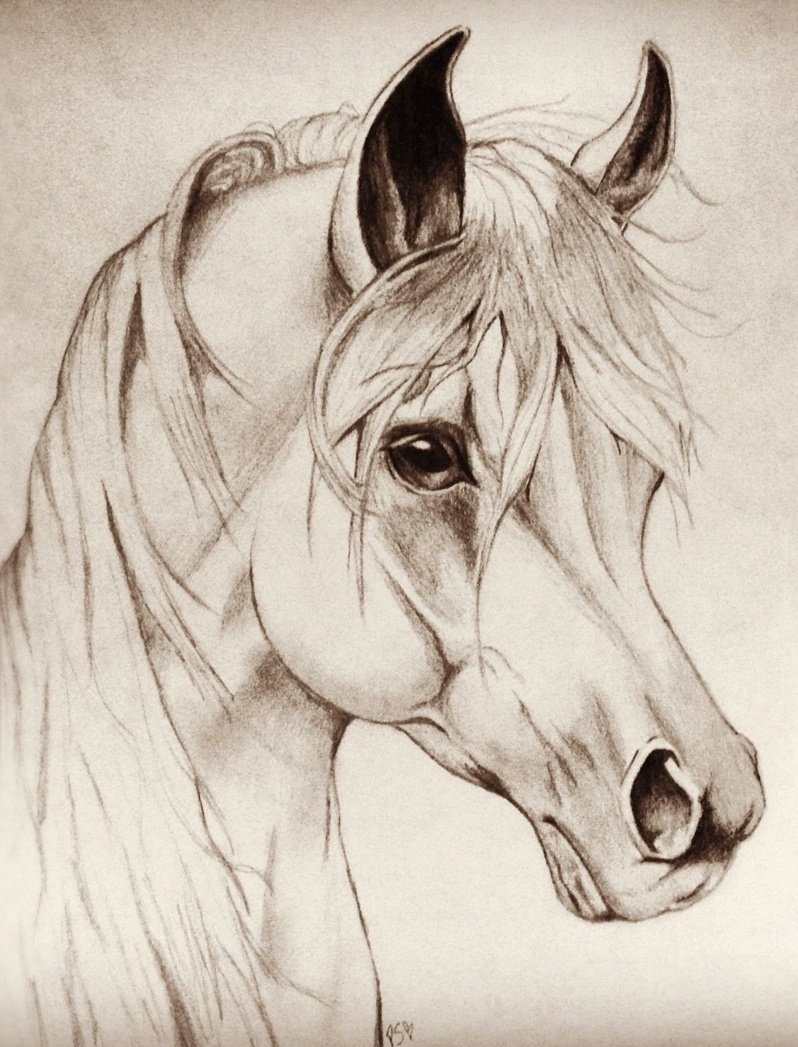 Horse drawing by patrycia sulewski drawn with pencil