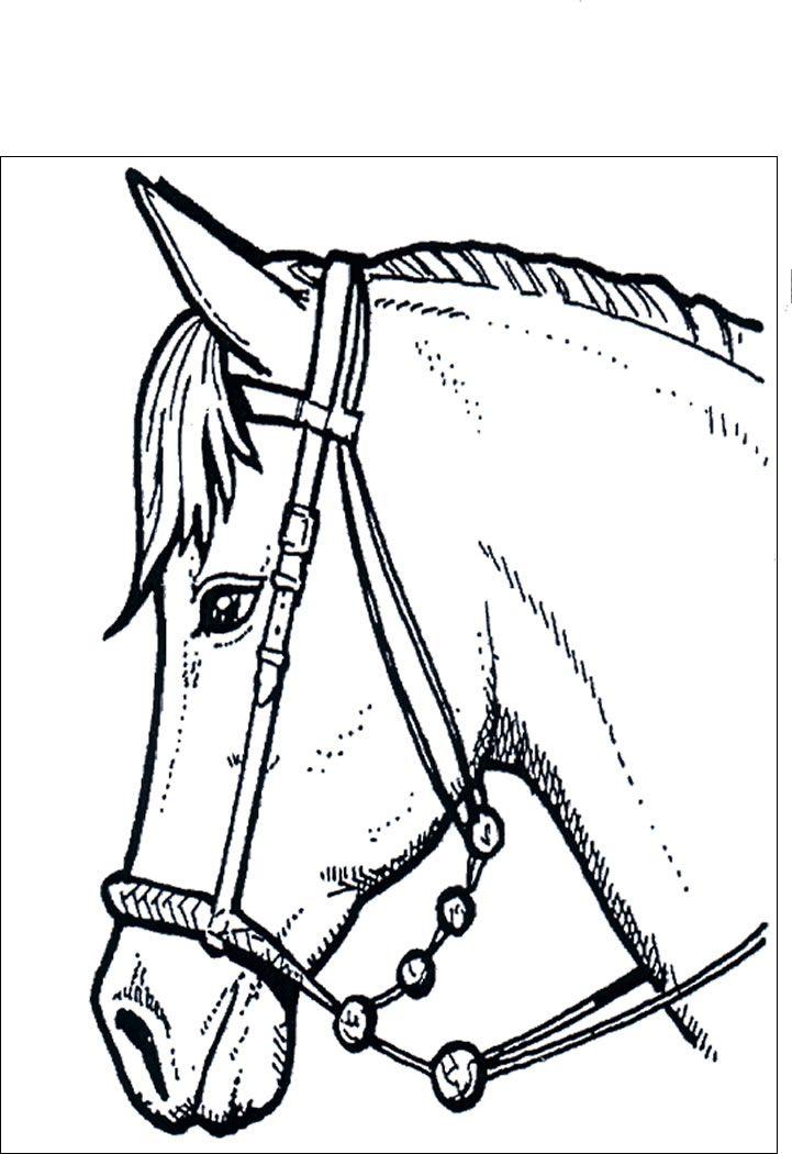 cavallo 44 disegni da colorare per adulti pagine da