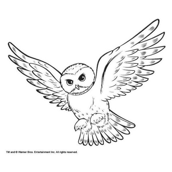 Coloring Snowy Owl Hedwig Picture Liked On Polyvore Featuring Home And Home Decor Owl Coloring Pages Owls Drawing Coloring Pages