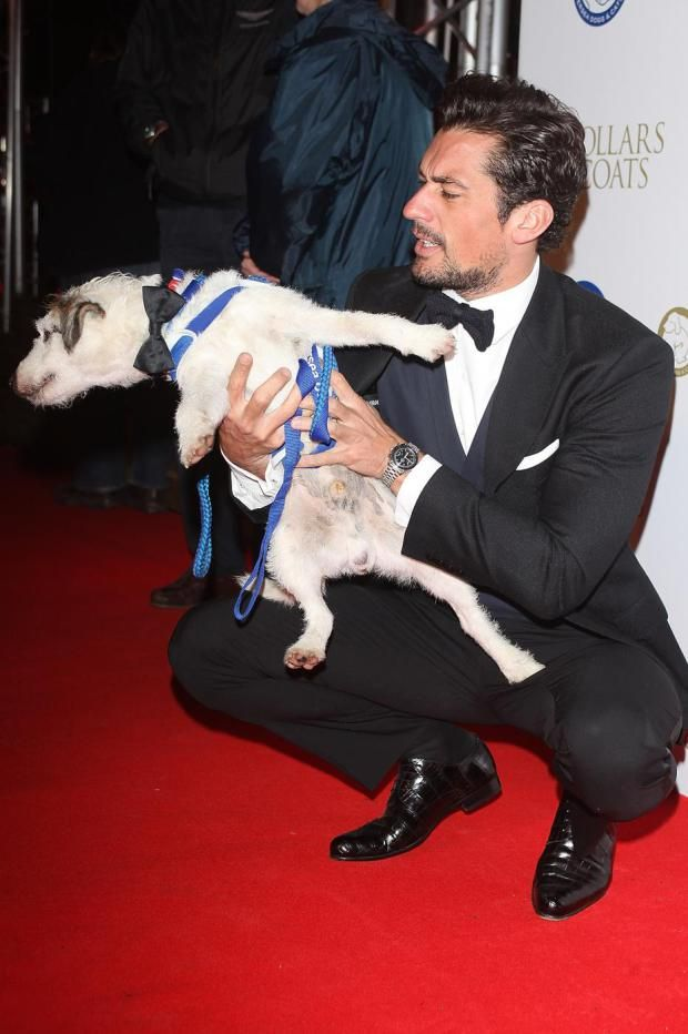 Battersea Dogs Home 10 things you'll only know if you