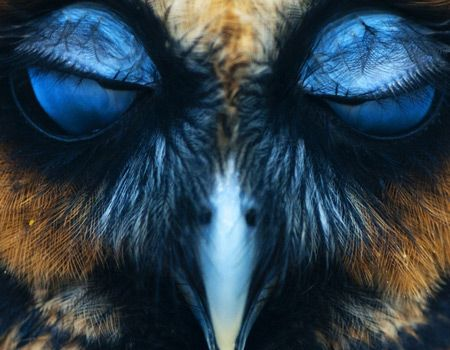 an owl with closed eyes | Owl eyes, Baby owls, Owl