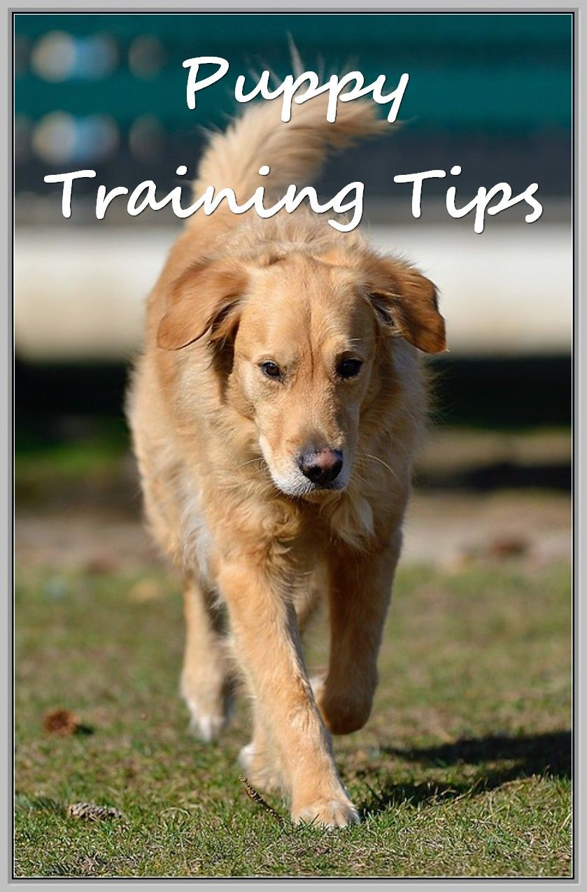 Basic Dog Training Dog Training Basic Dog Training Dogs