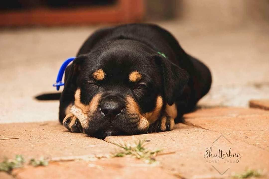 Photographer Shutterbug Capturedmoments Name Dusk Rescue