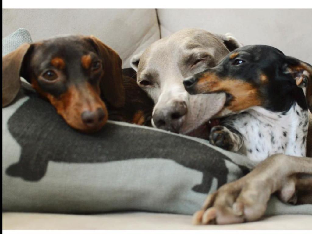 One little stinker Dog friends, Weenie dogs, Dogs