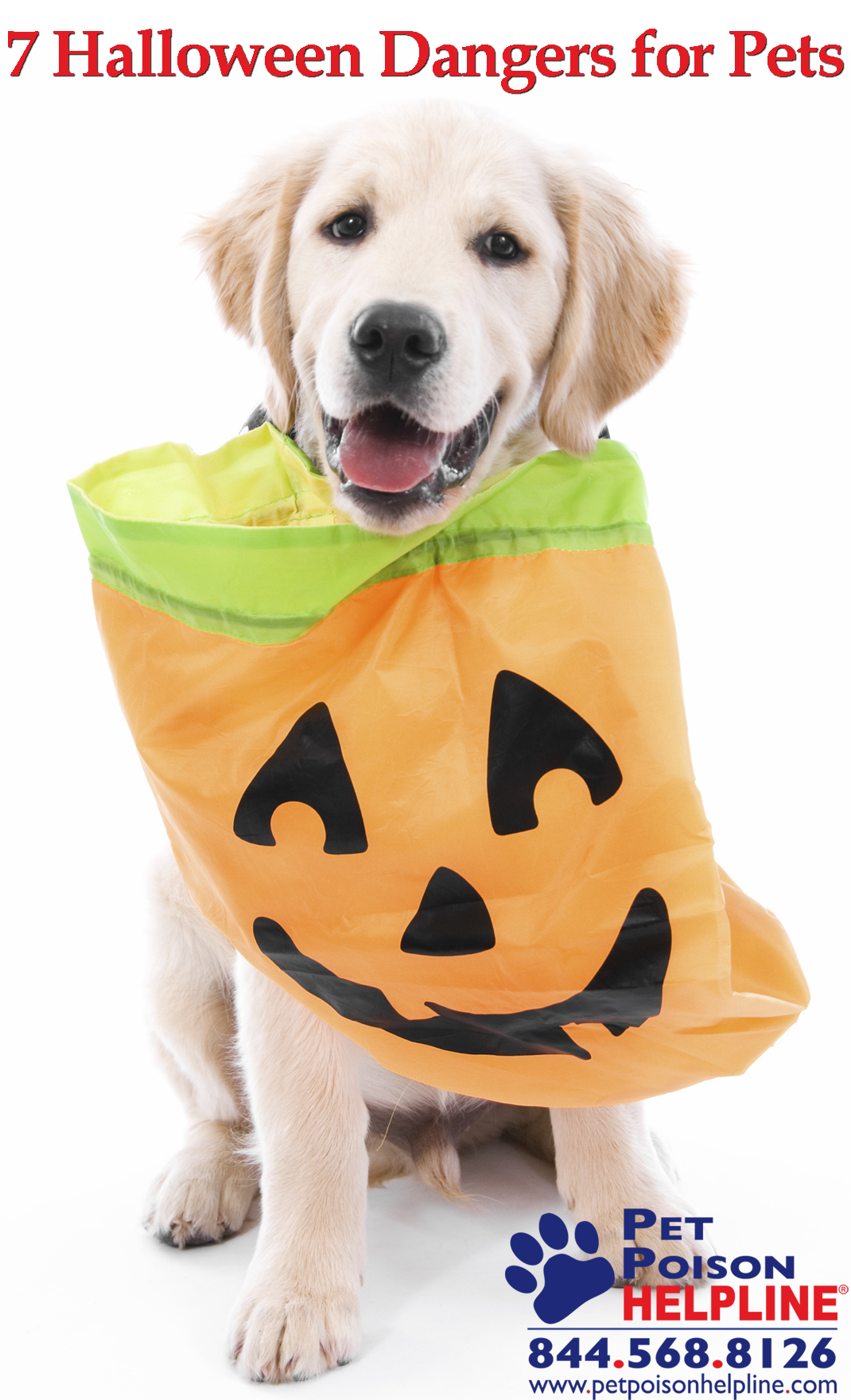 Halloween Dangers for Dogs and Cats Halloween Safety