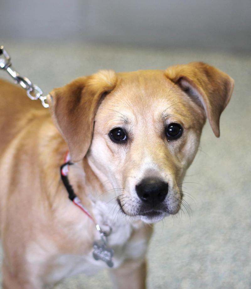 Adopt HeMan on A dogs prayer, Animal shelter, Animals
