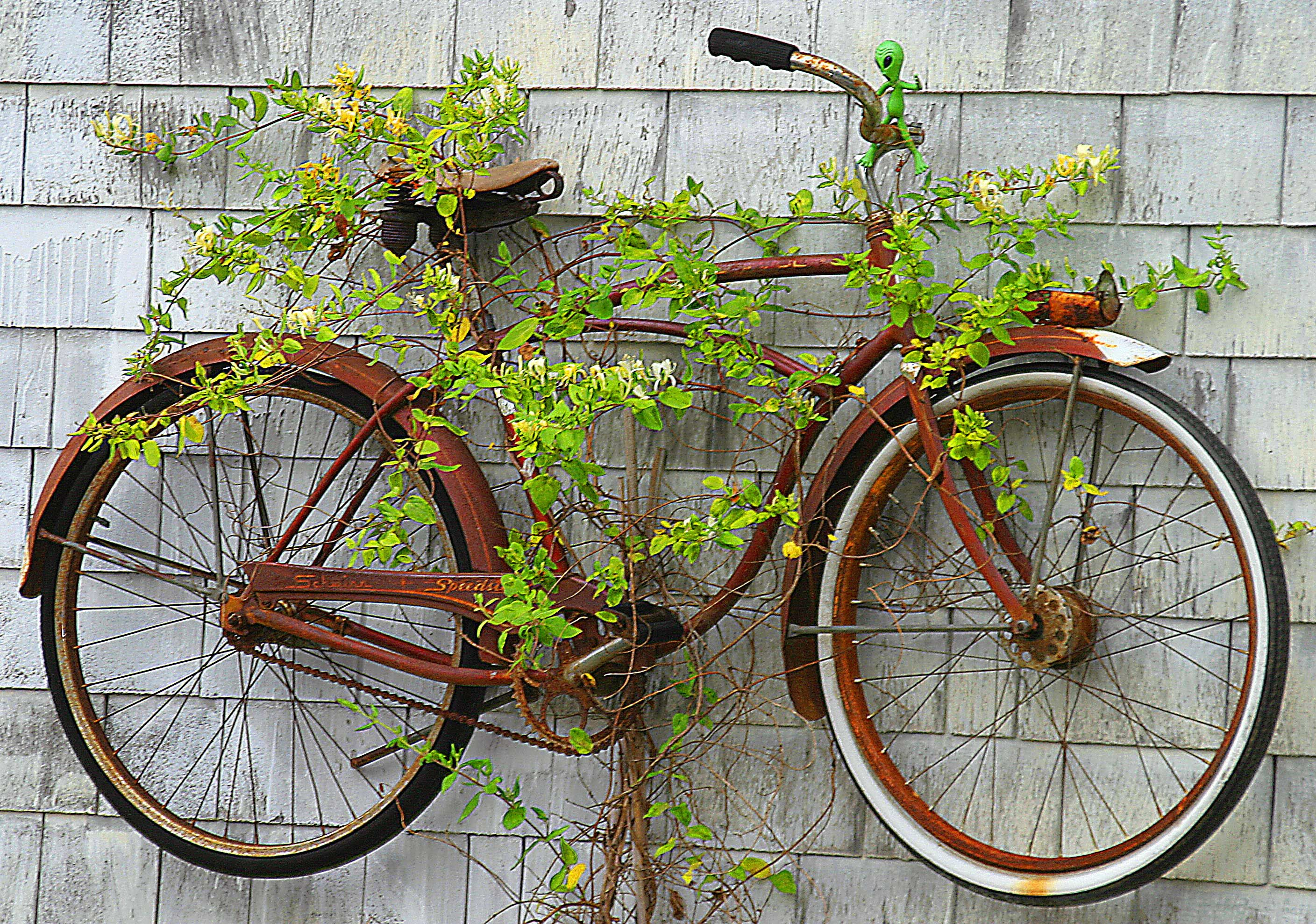 Bolinas #bicycle #cycling Bicycle Wall Bike