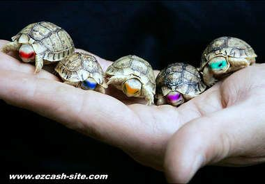 Pictures Of The Real Ninja Turtles
