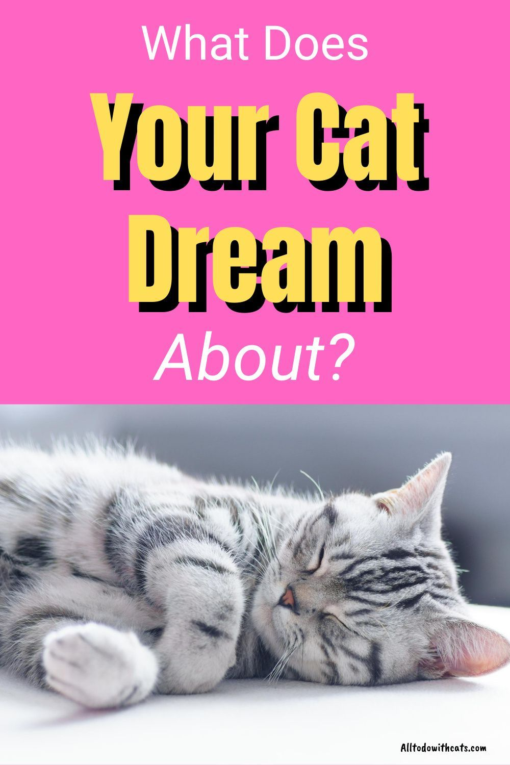 What Do Cats Dream About When They Are Asleep In 2020 Cat Facts Funny Cats Cat Facts
