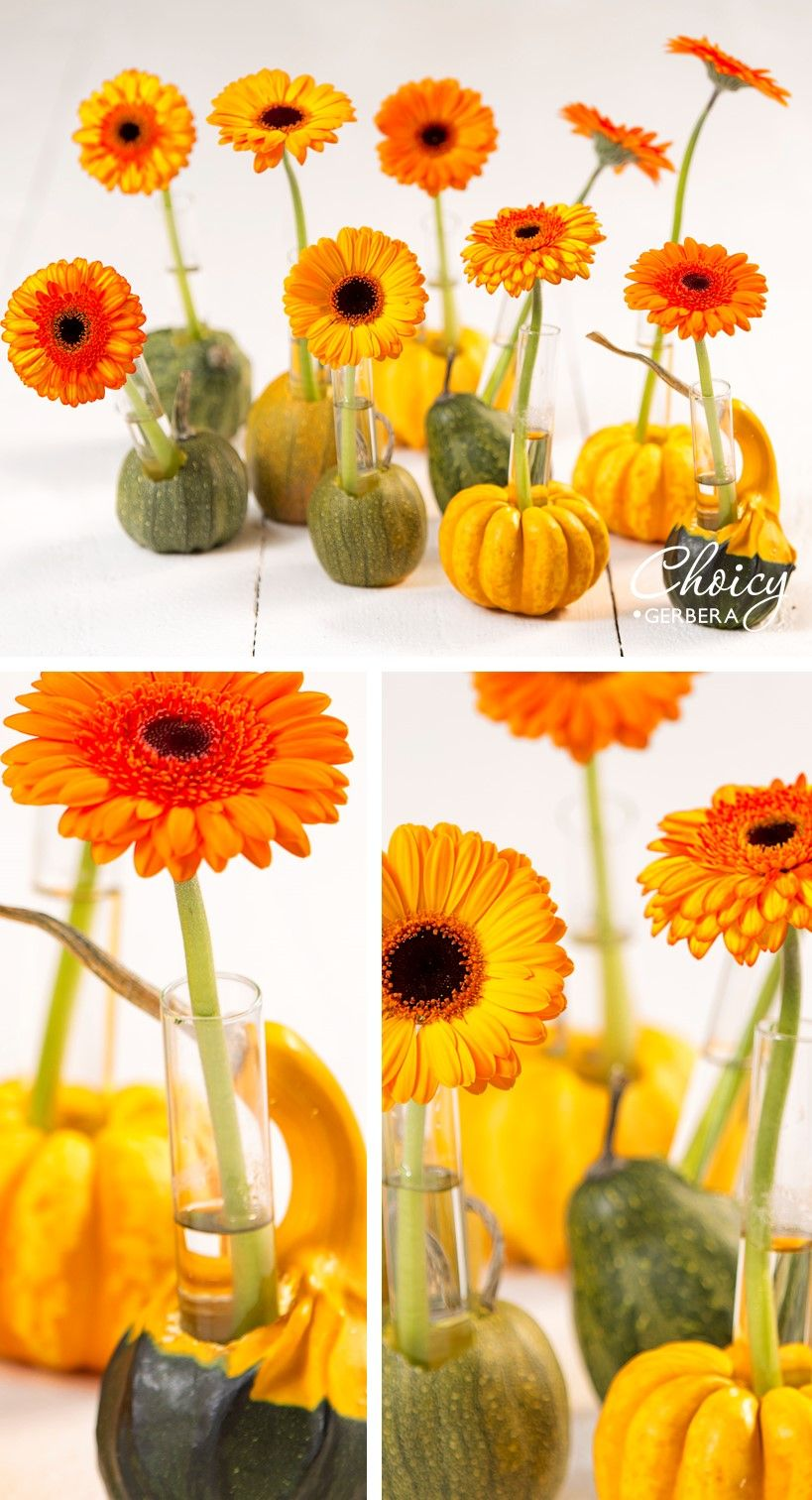 Done with scooping out pumpkins for Halloween? Try this DIY!