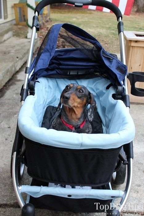 Review Ibiyaya Pet Stroller For Dogs Best Dog Strollers