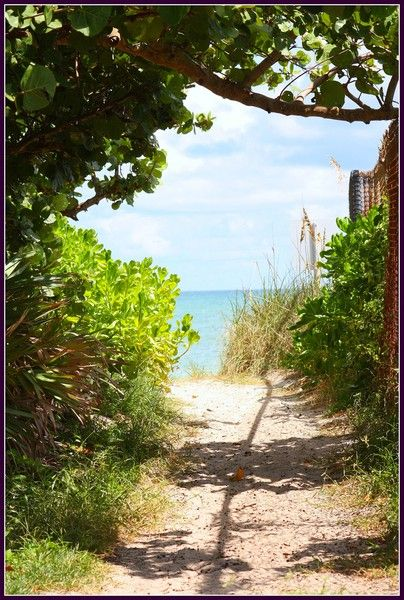 My Summer ? Exploring Summer Trails, Biking, Reading, Hiking, Sea Shell Collecting.  Vero Beach