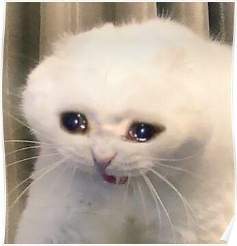 Crying Cat Meme' Poster by cherrygloss   Gato chorando, Gatos ...