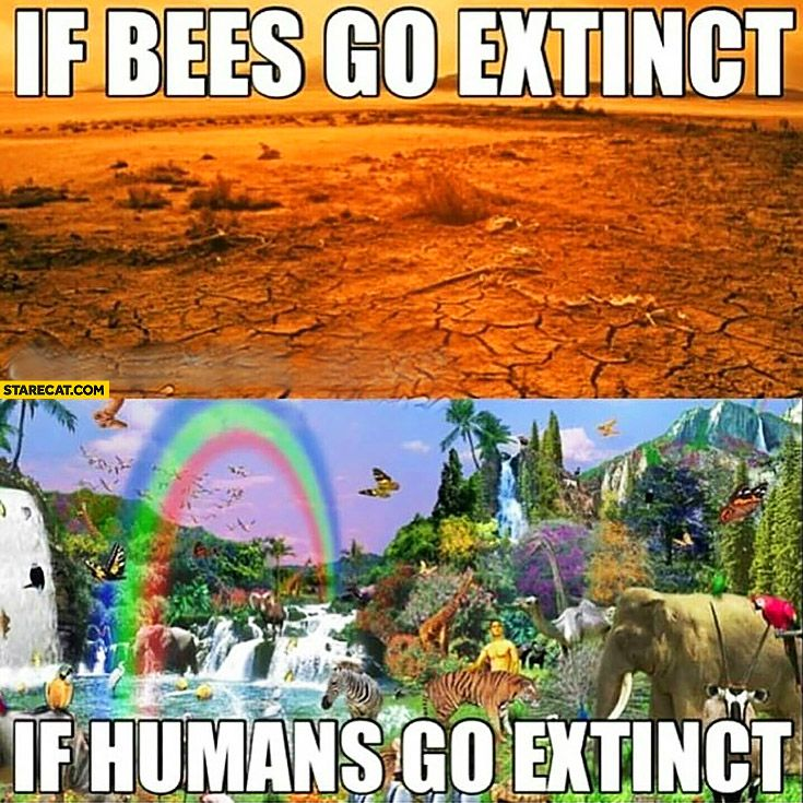 If Bees Go Extinct Save Our Earth Funny Pictures Pictures