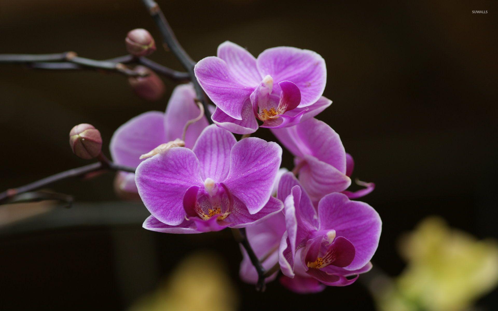 Purple orchids wallpaper themes art wallpapers pinterest