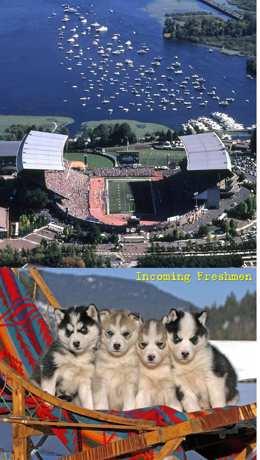 University Of Washington Huskies Incoming Freshmen University