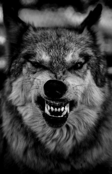 tomhardydotorg.tu... | tatoos | Pinterest | Wolf, Tattoo ideen und ...
