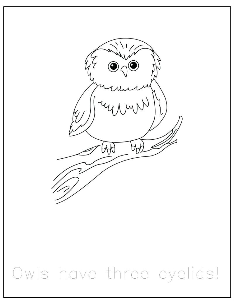 {FREE} Forest Animals Coloring Pages with Traceable Fun