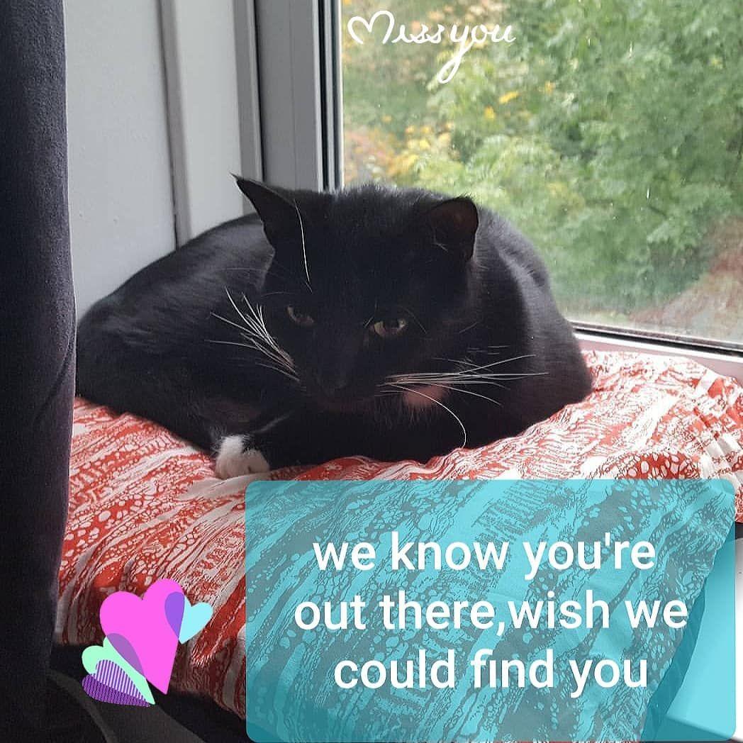 Kiki Lost Cat Losing A Pet Lost Cat Service Animal