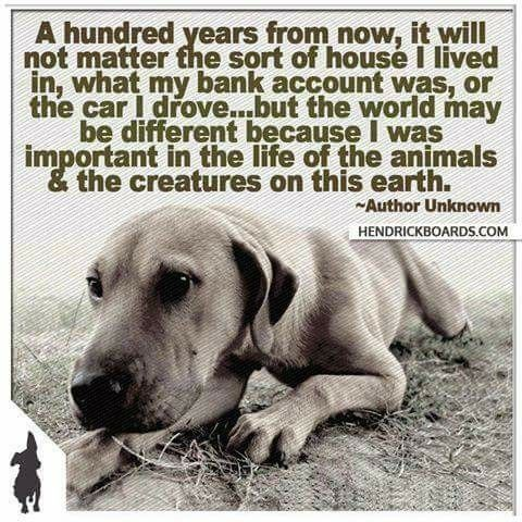 Pin By J Redd On Animal Advocacy Animals Dogs Animal Quotes
