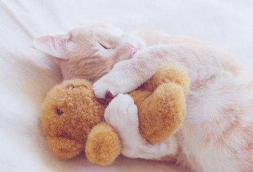 I Love you, snuggly bear.