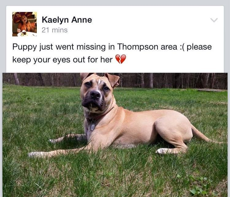 FOUND!!! ***Lost Dog*** Lost in Thompson CT please share