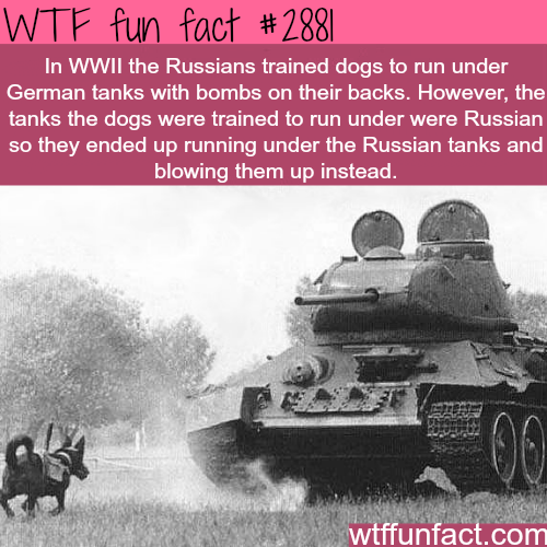 Funny Facts Ww2