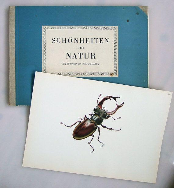 Schönheiten der Natur  Niklaus Stocklin 1942  by ladybakelite