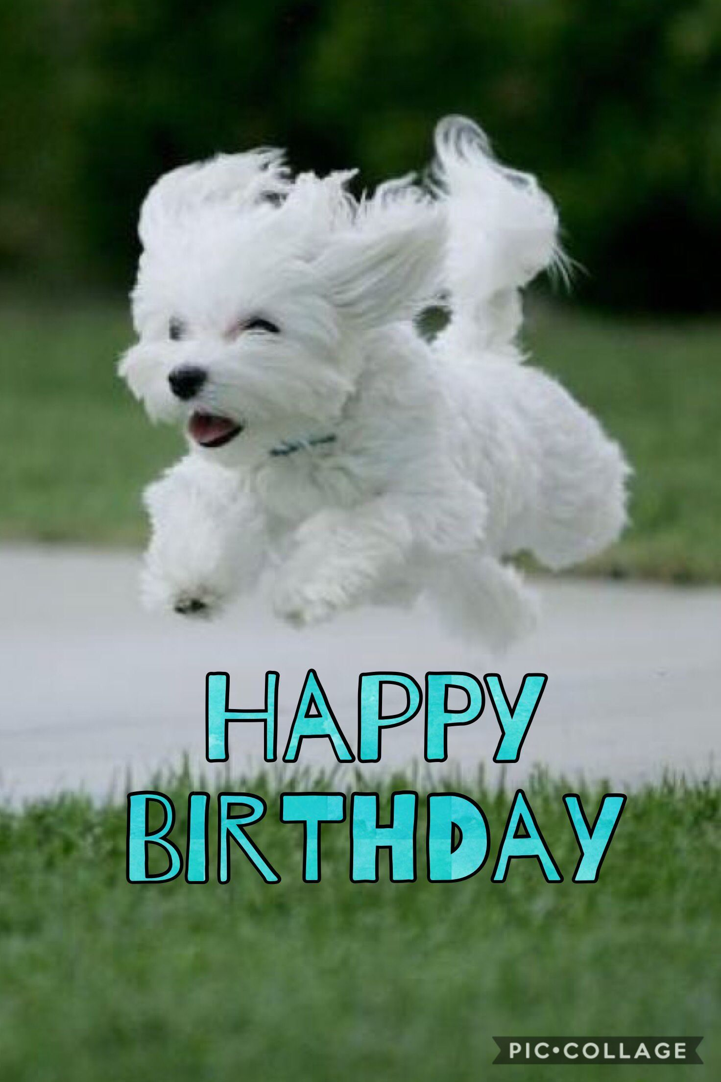 Smurf Birthday Party Happy Birthday Fun Happy Birthday Dog Happy Birthday Messages