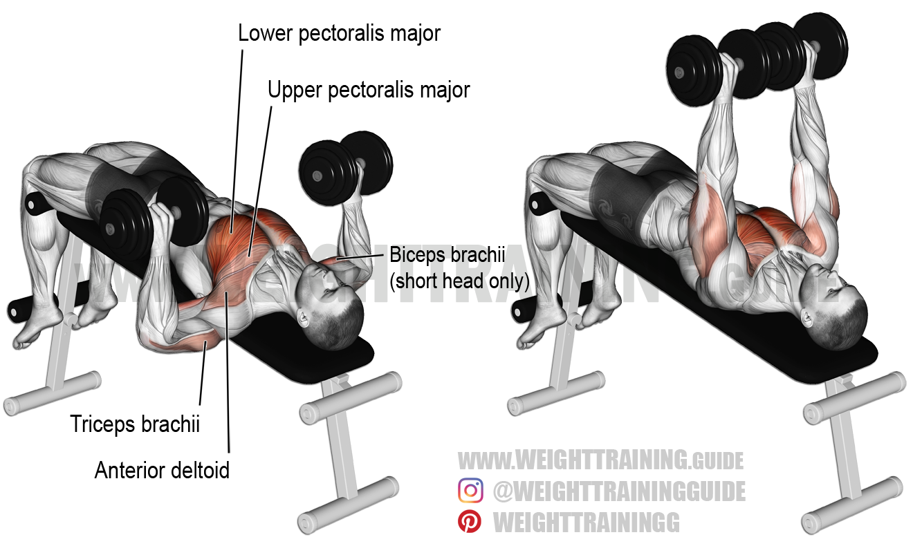 Decline Dumbbell Bench Press A Compound Exercise Target