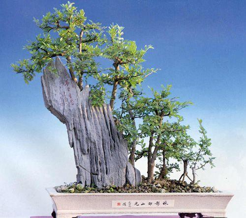Pin By Ricknancy Toves On Plants For My Miniature Village Bonsai Forest Bonsai Tree Bonsai Art