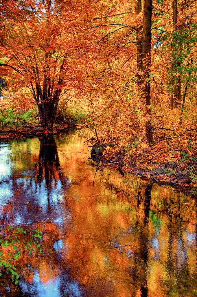 Fall Foliage Beautiful Fall Beautiful Nature Beautiful Places