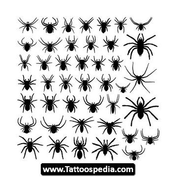 Spider Web Tattoos Designs 03 Jpg 360 360 Pixels Spider Tattoo Web Tattoo Spider Web Tattoo
