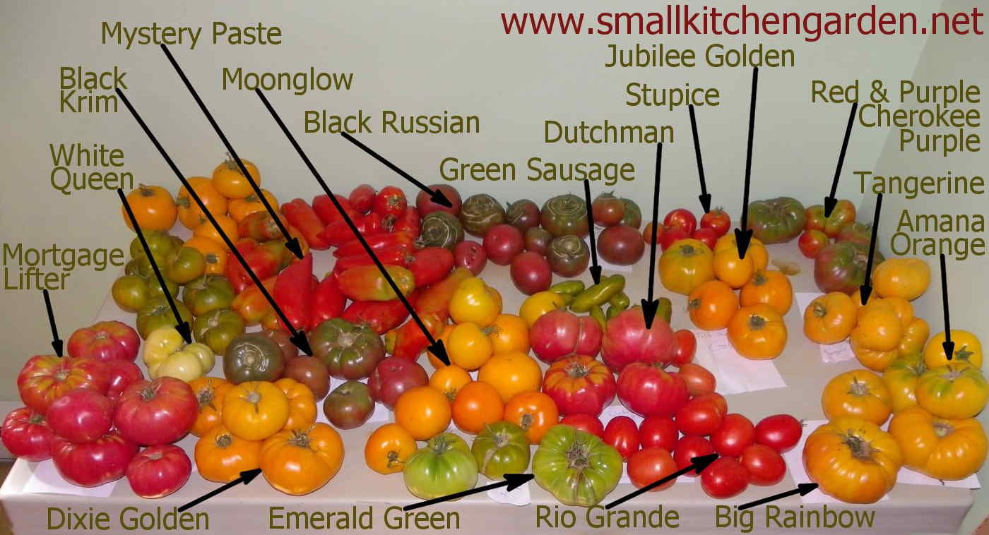 2015 heirloom tomato seed giveaway roulette   mailto:freeseeds@smallkitchengarden.net #skgseeds15