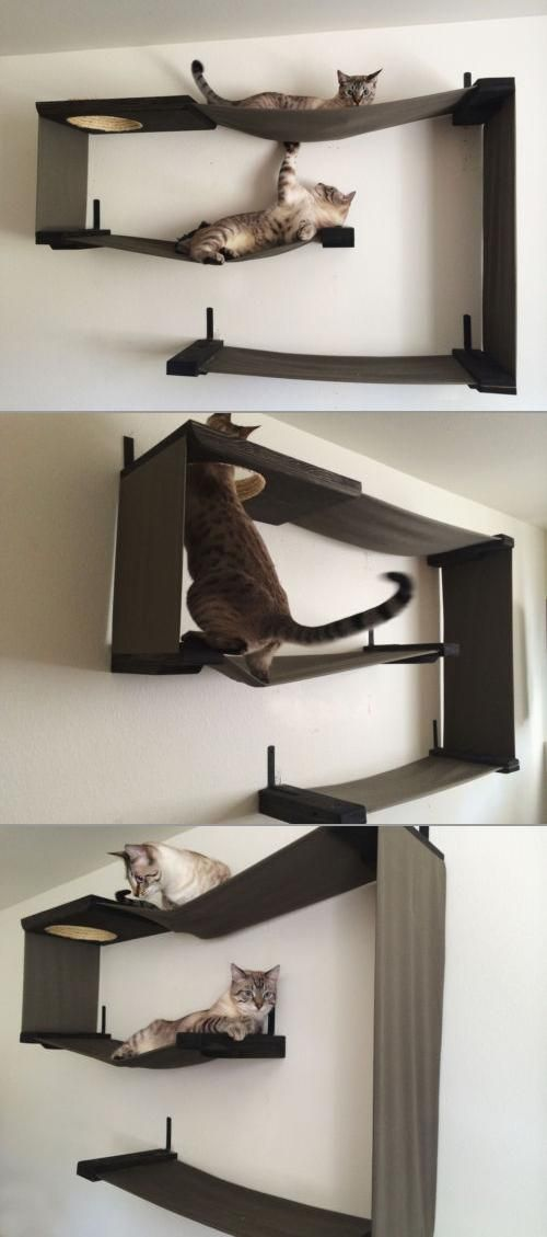 This is what the walls in Cat